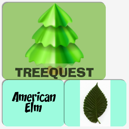 Treequest Memory Game